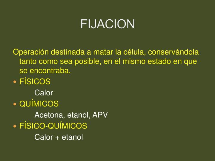 FIJACION