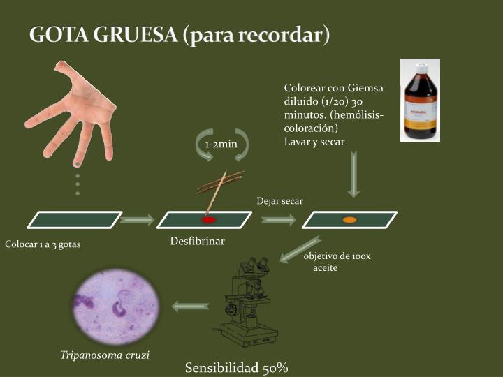 GOTA GRUESA (