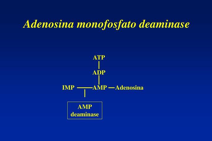 Adenosina monofosfato deaminase