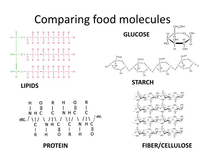 Comparing food molecules
