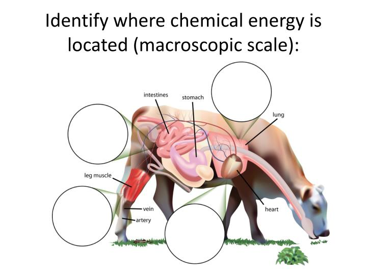 Identify where chemical energy is located (macroscopic scale):