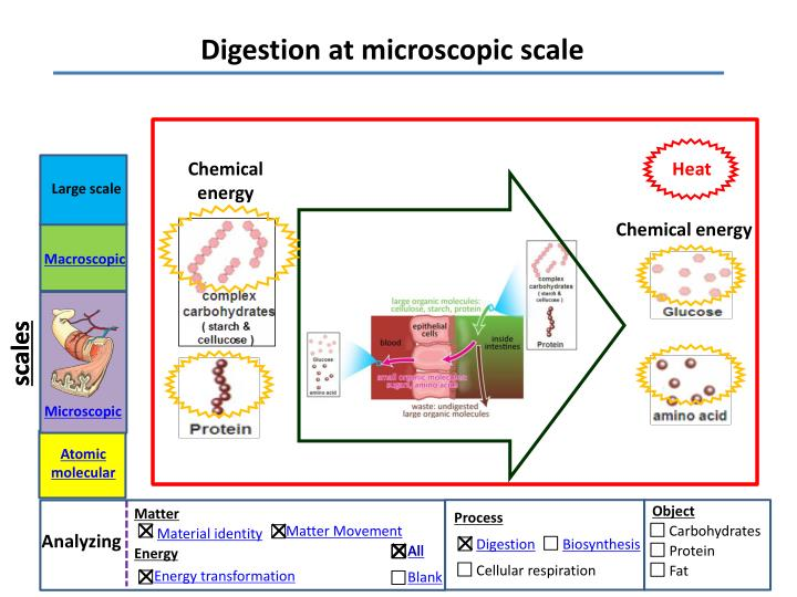 Digestion at microscopic scale