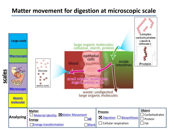 Matter movement for digestion at microscopic scale