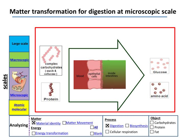 Matter transformation for digestion at microscopic scale