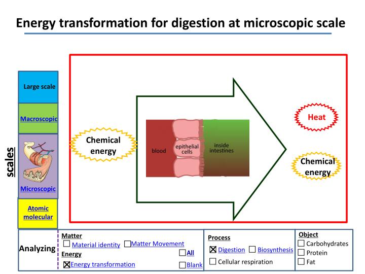 Energy transformation for digestion at microscopic scale