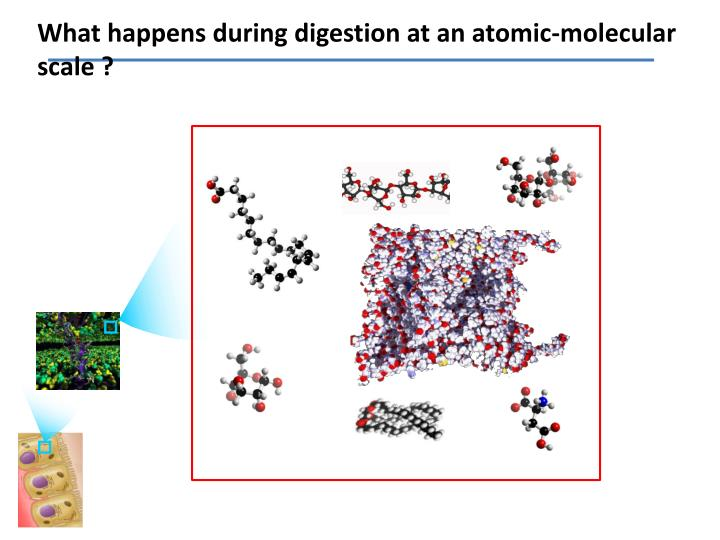 What happens during digestion at an atomic-molecular scale ?