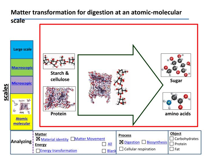 Matter transformation for digestion at an atomic-molecular scale