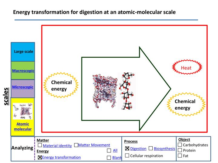 Energy transformation for digestion at an atomic-molecular scale