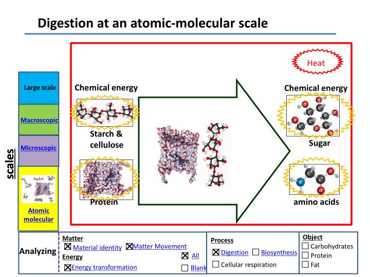 Digestion at an atomic-molecular scale