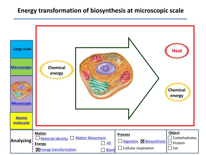 Energy transformation of biosynthesis at microscopic scale