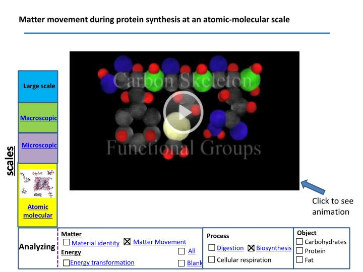 Matter movement during protein synthesis at an atomic-molecular scale