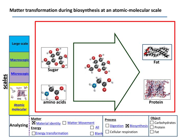 Matter transformation during biosynthesis at an atomic-molecular scale