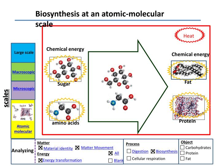 Biosynthesis at an atomic-molecular scale