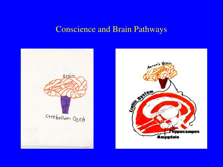 Conscience and Brain Pathways