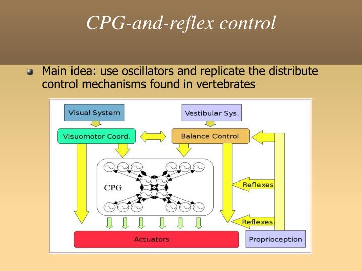 CPG-and-reflex control