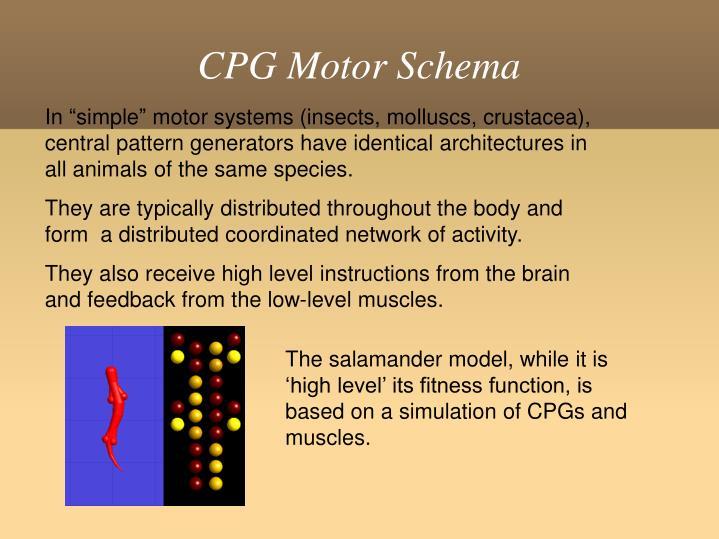CPG Motor Schema