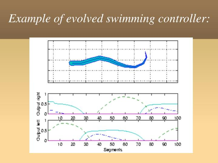 Example of evolved swimming controller: