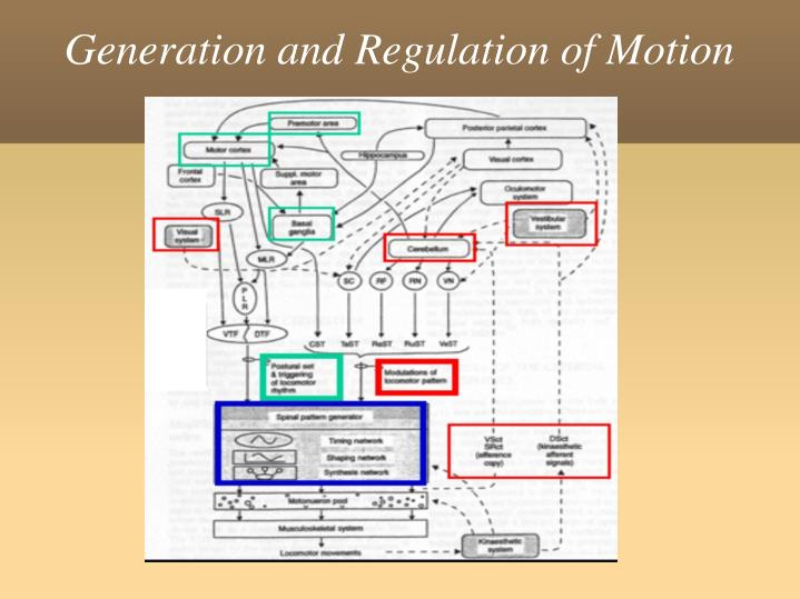 Generation and Regulation of Motion