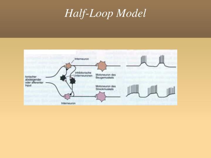 Half-Loop Model