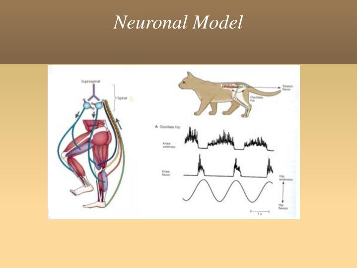 Neuronal Model