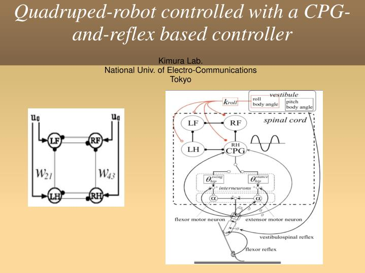 Quadruped-robot controlled with a CPG-and-reflex based controller