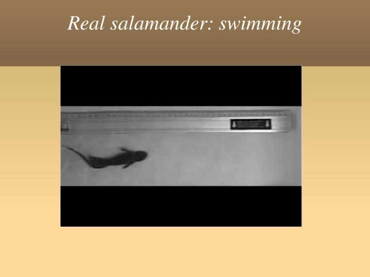 Real salamander: swimming