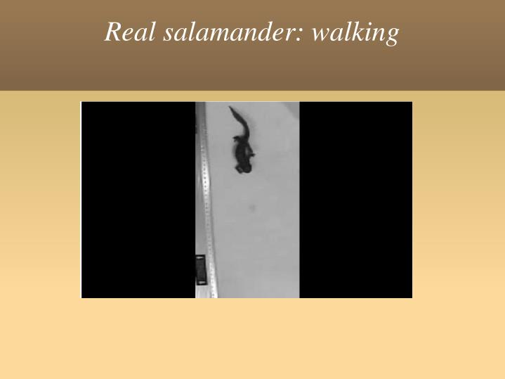 Real salamander: walking