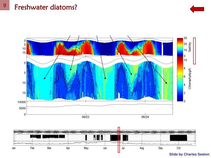 Freshwater diatoms?