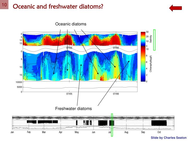 Oceanic and freshwater diatoms?