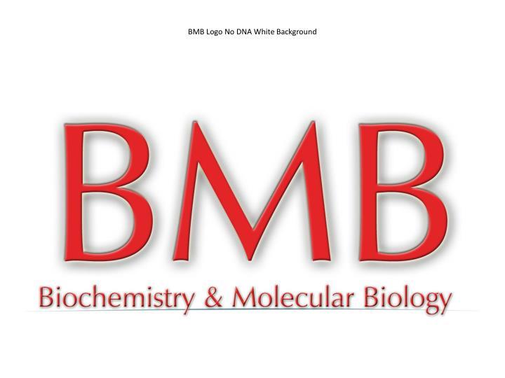 BMB Logo No DNA White Background