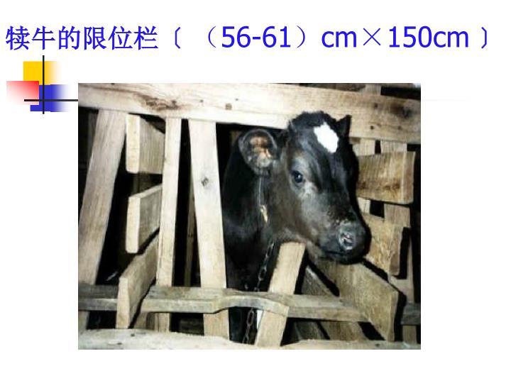 犊牛的限位栏