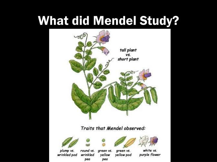 What did Mendel Study?