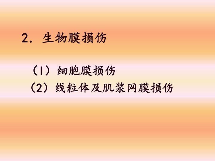 2.生物膜损伤