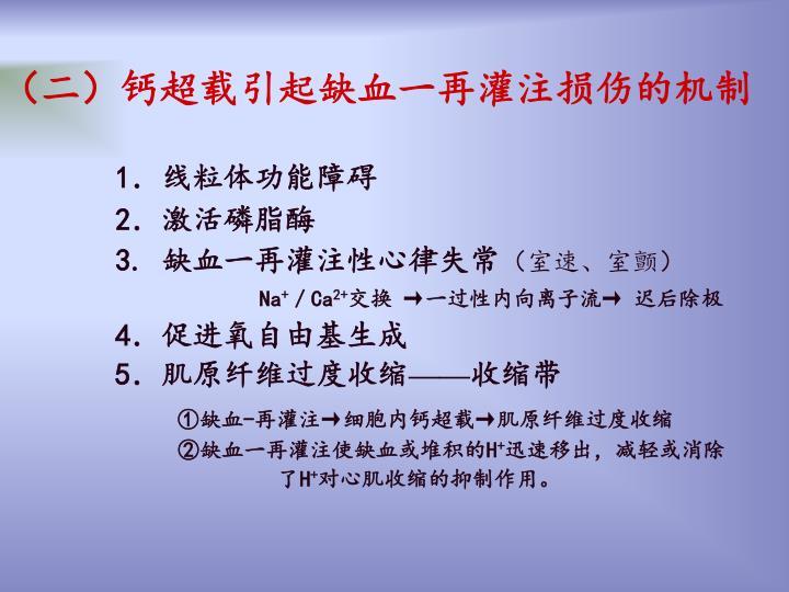 (二)钙超载引起缺血一再灌注损伤的机制