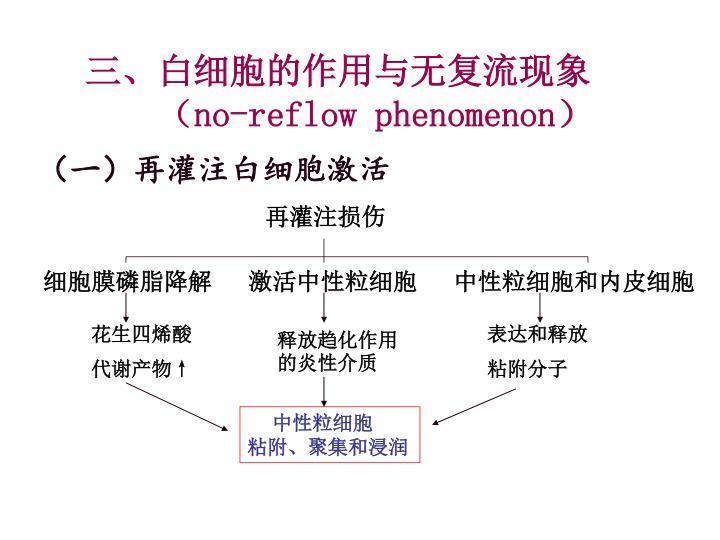 三、白细胞的作用与无复流现象