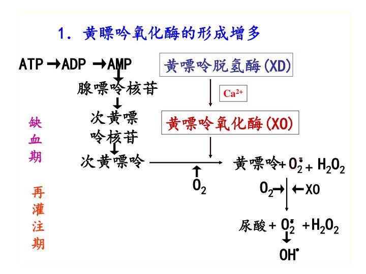 1.黄瞟吟氧化酶的形成增多