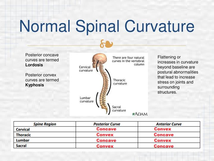 Normal Spinal Curvature