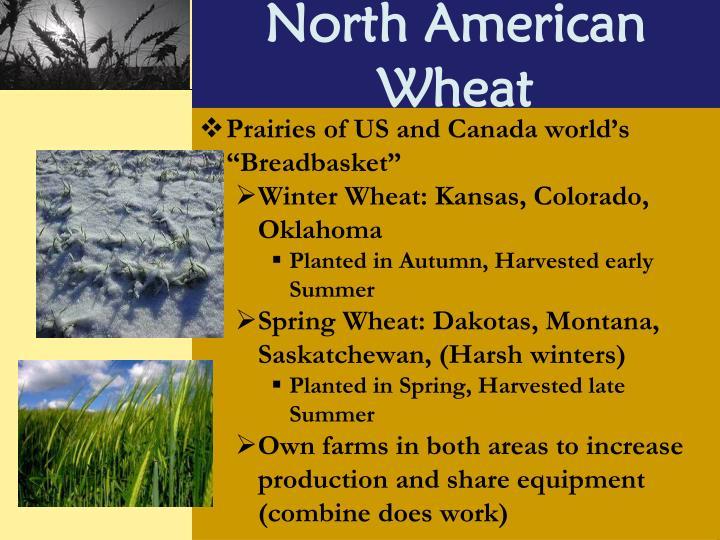 North American Wheat