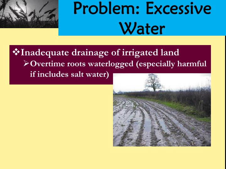 Problem: Excessive Water