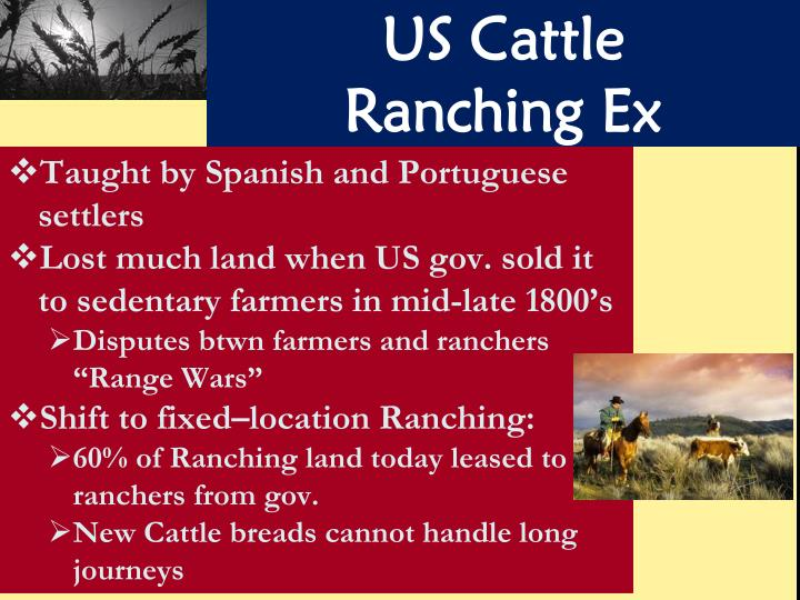 US Cattle