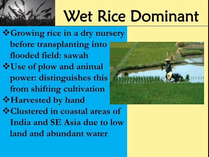 Wet Rice Dominant