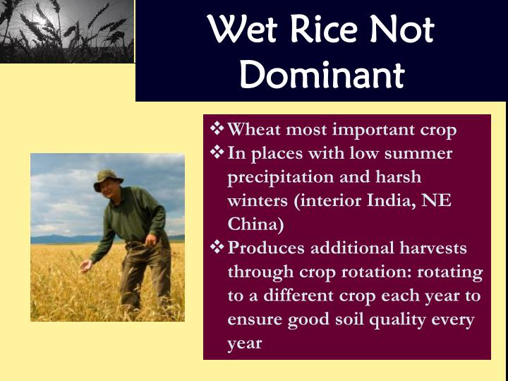 Wet Rice Not Dominant