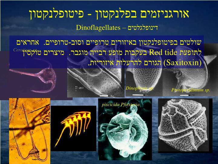 אורגניזמים בפלנקטון - פיטופלנקטון