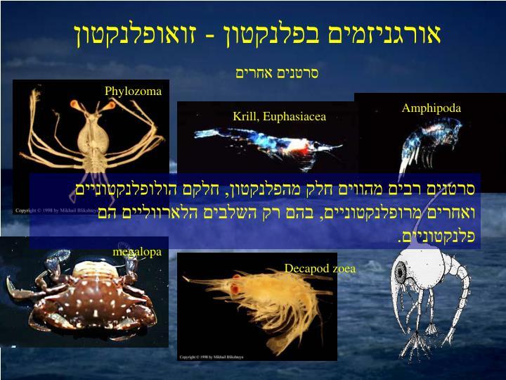 אורגניזמים בפלנקטון - זואופלנקטון