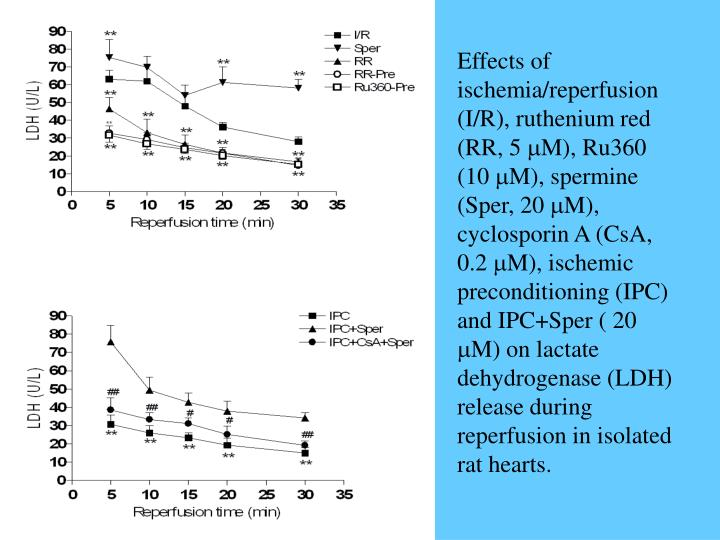 Effects of ischemia/reperfusion (I/R), ruthenium red (RR, 5