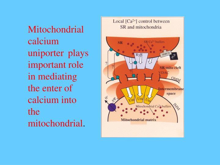 Mitochondrial calcium uniporter