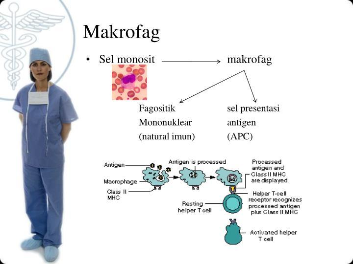Makrofag