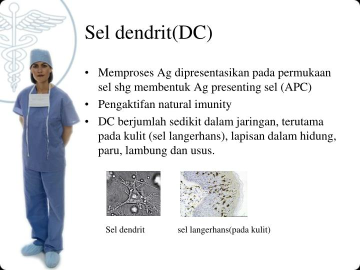 Sel dendrit(DC)