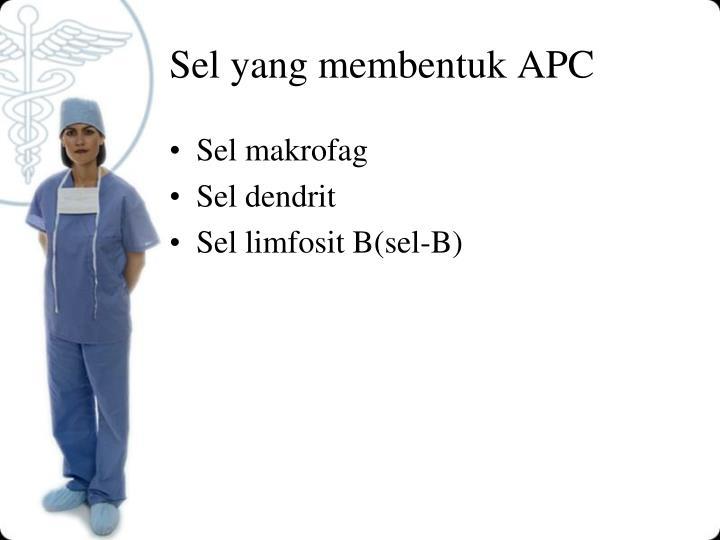 Sel yang membentuk APC