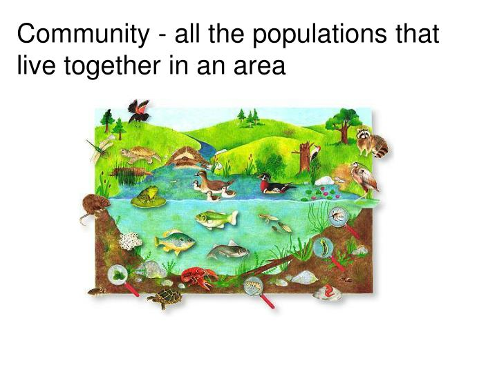 Community - all the populations that live together in an area